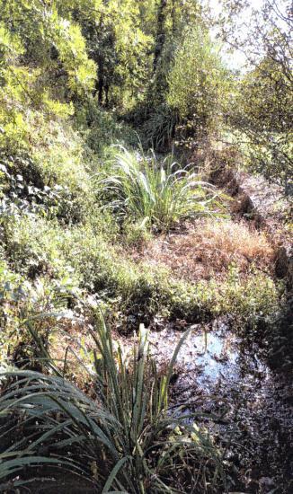 La végétation envahissante