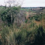 Végétation présente